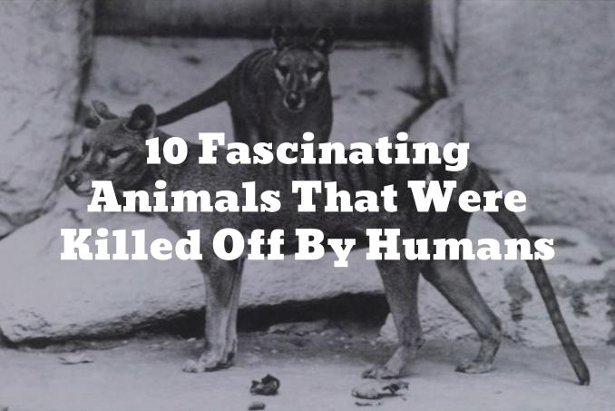 10 Fascinating Extinct Animals That Were Killed Off By Humans