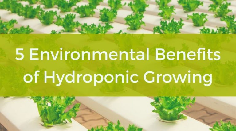 5 Environmental Benefits of Hydroponic Growing (Explained in Detail)