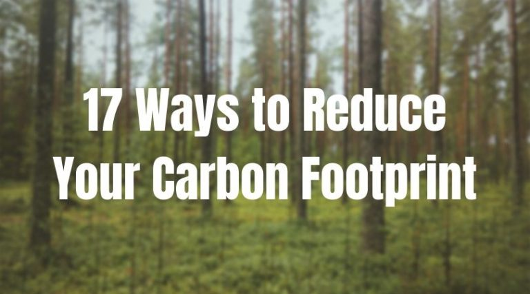 17 Ways to Reduce Carbon Footprint (Simple & Effective Tips)