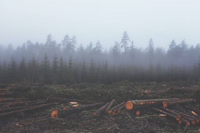 Photo of an area that has been clear-cut (deforested)