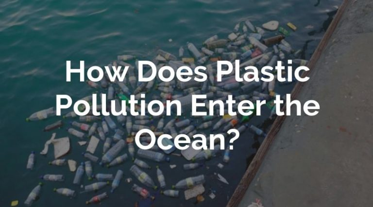 How Does Plastic Pollution Enter the Ocean? (Explained)