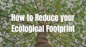 11 Simple Ways to Reduce Your Ecological Footprint