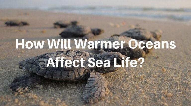 8 Ways Warmer Oceans Will Affect Sea Life