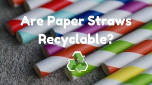 Are Paper Straws Recyclable? (How to Dispose of Paper Straws)