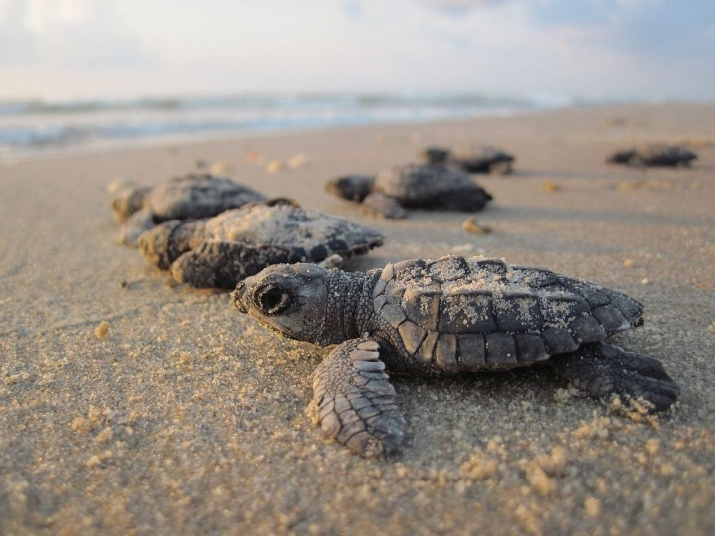 Hatchling Sea Turtles - 8 Ways Warmer Oceans Will Affect Marine Life