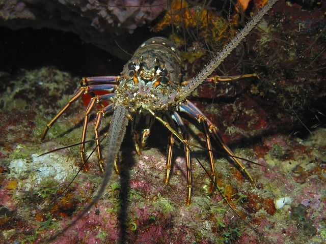 Lobster in the Ocean - 8 Ways Warmer Oceans Will Affect Marine Life