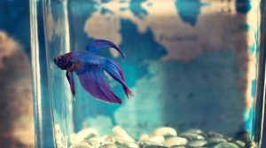 8 Tips to Create and Maintain an Awesome Eco-Friendly Aquarium