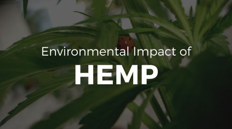 The Environmental Impact of Hemp – Is Hemp Sustainable?
