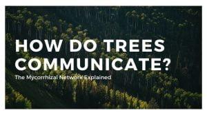 How Do Trees Talk With Each Other? (Mycorrhizal Network Explained)