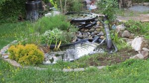 How to Build a Sustainable Backyard Pond