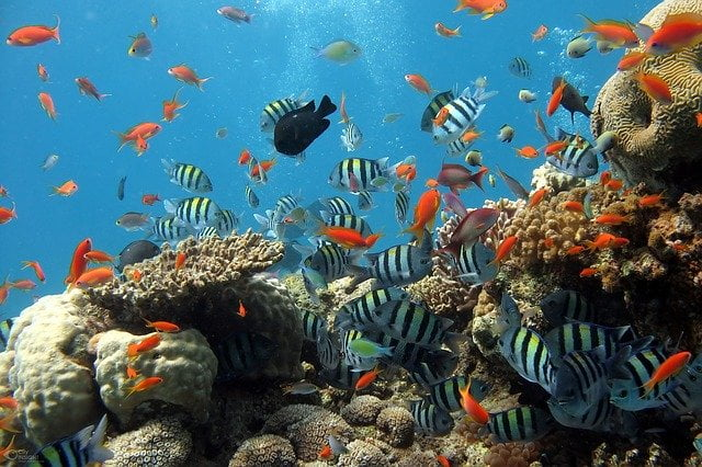 Coral Reef with Fish - Sustainable Diving & Snorkeling Guide