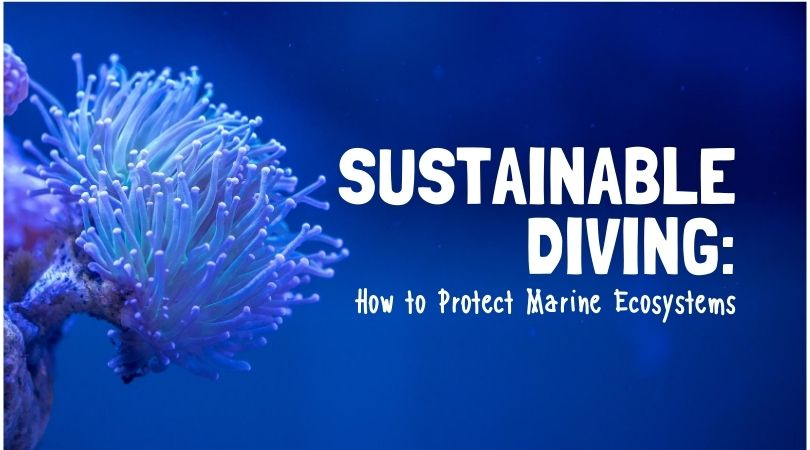 Sustainable Diving & Snorkeling: How to Prevent Damage to Marine Ecosystems